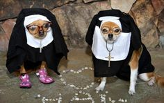 Quotations about dogs, puppy quips and quotes. Internet Pet Supplies presents animal humor, dog jokes, cat stories, pet. Funny Animal Pictures, Funny Animals, Cute Animals, Dog Pictures, Dog Halloween Costumes, Pet Costumes, Halloween Stuff, Nun Costume, Halloween Parade