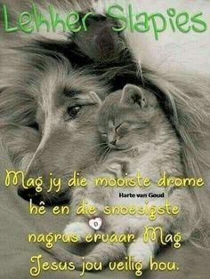 Good Night Blessings, Good Night Wishes, Good Night Sweet Dreams, Good Night Sleep Tight, Goeie Nag, Afrikaans Quotes, Good Night Image, Night Quotes, Qoutes