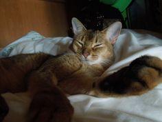 ディズニー旅行2日目は。 - http://iyaiyahajimeru.jp/cat/archives/60849