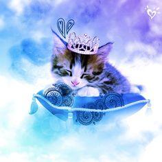 Sweet, cuddly kitty princess <3