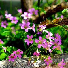 #gardenflowers#tulip#ig_flowers#flowerslovers#instaflower#igersflower##piante#verde#photographer#passeggiata#ariadiprimavera#natureinstagram##bellezzadellanatura#viola#naturelovers#pic#yellow#blu#blue#white#bestpic#spring#picoftheday#pink#green#rosa#profumo#myflowers#KINGS_FLORA by danamusumeci