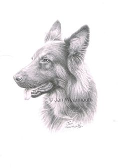 Custom pet portrait in graphite pencil from your photographs, A4 size. Dog, cat or any pet. Pencil drawings. German Shepherd.