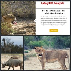 Visit www.datingwithpassports.com to read about my Eco-friendly safari at nThambo Tree Camp in South Africa.