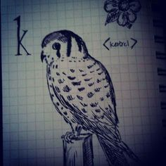 Here's a kestrel for your Easter basket!