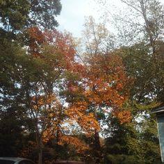 Fall Leaves, Fall Decor, World, Plants, Color, Autumn Leaves, Planters, Colour, Fall Decorating