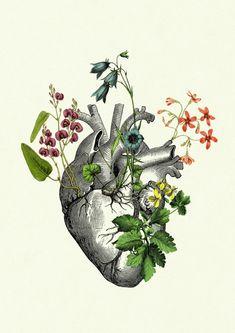 Digitaldruck Herz Anatomie mit Blumen,  Botanik Liebe / black and white illustration of a heart with watercolour flowers made by oddemporium via DaWanda.com