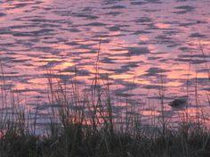 Sunset on the Salt Marsh by Kathee McCormack