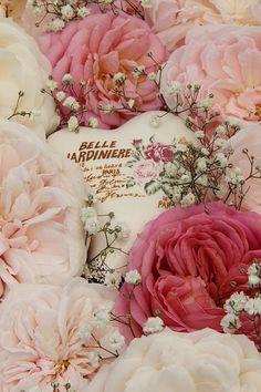Belle Jardiniere..