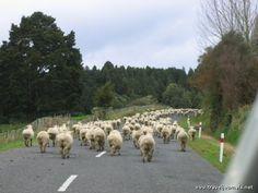 NZ traffic jam, New Plymouth, New Zealand