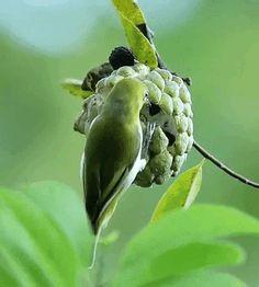 Rare Birds, Exotic Birds, Colorful Birds, Beautiful Gif, Beautiful Birds, Animals Beautiful, Animals And Pets, Cute Animals, Animiertes Gif