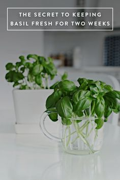 """""""Get fresh potted basil in the grocery store, cut the stems off at dirt level and stick them in a glass of water for a couple of weeks. After the stems grow roots you plant them in potting soil in a large pot and you have fresh basil for the whole season. Green Garden, Herb Garden, Vegetable Garden, Garden Plants, Vegetable Dishes, Container Gardening, Gardening Tips, Fresco, Growing Herbs"""