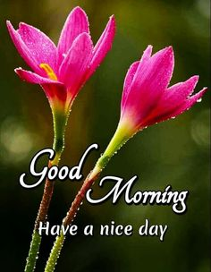 Good Morning Images For Whatsapp Good Morning Nature Images, Good Morning Beautiful Pictures, Good Morning Love Messages, Good Morning Inspiration, Good Morning My Love, Good Morning Picture, Good Morning Greetings, Morning Pictures, Good Morning Wishes