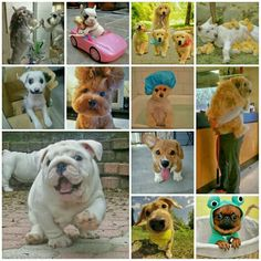 Cute and Funny Dogs