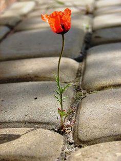 ben gibi,gibi mi böyle mi hayır,değil eğer yoda böyle çiçekler görürsem artık durup sevicem onu,onunla konuşucam