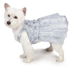 Zack and Zoey Shimmer Nights 'Whitney' Dress for Dogs, 8' XX-Small -- Details can be found by clicking on the image. (This is an affiliate link) #MyPet