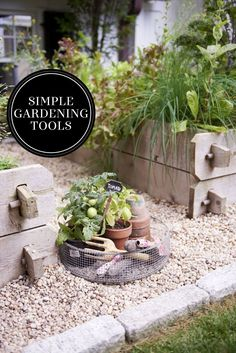Give preteens room to bloom with the essentials for a backyard veggie garden. Once they've cultivated a green thumb, everyone in the family may start eating better.