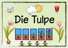 """Themenplakat """"Die Tulpe"""" Fertig geworden ist auch das Plakat zum Thema """"Die Tulpe"""". Ich würde mich freuen, wenn es euch gefällt. Euch al..."""