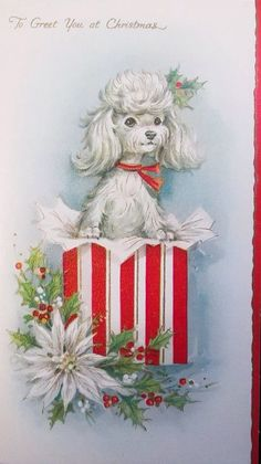 Poodle greeting at Christmas. Christmas Card Sayings, Vintage Christmas Cards, Retro Christmas, Christmas Greeting Cards, Christmas Pictures, Christmas Greetings, Vintage Cards, Vintage Photos, Christmas Puppy