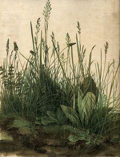 Das große Rasenstück Albrecht Dürer Wiese Gras Pflanzen Natur Bütten H A3 0338 - Billerantik