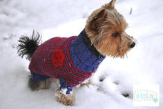 Hey, I found this really awesome Etsy listing at https://www.etsy.com/ca/listing/221506608/pet-clothing-small-dog-clothes-hand-knit