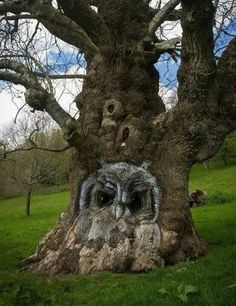 This tree is awesome. Someone carved the tree and owls live here. Art Et Nature, Nature Tree, Owl Tree, Tree Art, Weird Trees, Tree Faces, Tree Carving, Unique Trees, Tree Of Life