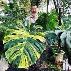 easy house plants No more confusion! Alle monstera species in a row so that you finally know which plant to buy and which monstera species you have. Unusual Plants, Rare Plants, Exotic Plants, Cool Plants, Tropical Plants, Plant Aesthetic, Plants Are Friends, Variegated Plants, Interior Plants