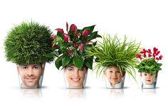 Flower pots.