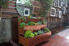 succulent dresser
