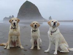 Cannon Beach, OR...been there...one of the most beautiful places!