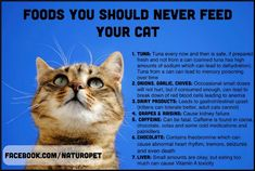 Things your cat should not eat! on Pinterest