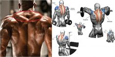 The Best Exercises To Build Massive Traps !!!