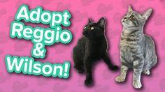 Adopt Wilson & Reggio! // Kittens // Adoptable Featurette… #funnypetvideos #funnyanimals