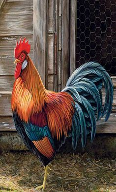 Wildlife art prints plus original paintings with a wide selection . Rooster Painting, Rooster Art, Rooster Decor, Rooster Images, Chicken Painting, Chicken Art, Chicken Drawing, Motifs Animal, Chickens And Roosters