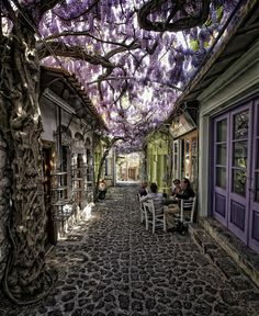 Wisteria covered street In Greece