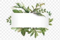 Wedding Logos, Wedding Cards, Tangled Wallpaper, Floral Border, Leaf Border, Flower Graphic Design, Transparent Flowers, Shotting Photo, Wreath Drawing