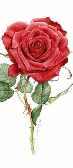 Frivolous Fabulous - Victorian Red Roses