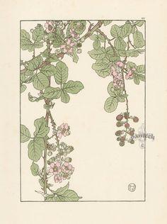 "The Bramble - Jeannie Foord - ""Decorative Flower Studies"", Pochoir Prints, 1901."