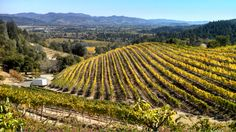 Newton Vineyards View
