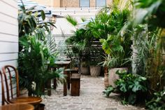 Tropical plants on the patio at Basic Kitchen in Charleston, South Carolina.