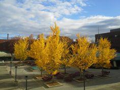 Powell Plaza at Eastern Kentucky University (**)