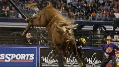 Cody Lambert believes Bushwacker is still the favorite to win the World Champion Bull title. Cody Lambert, Ty Murray, Professional Bull Riders, Bucking Bulls, Rodeo Cowboys, Rough Riders, Bull Riding, Cowboy And Cowgirl, Country Music