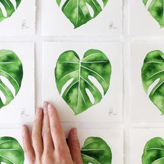 """Starting now on my website every order over $50 will receive a 5"""" x 5"""" Young Monstera original watercolor painting. 50 available - one per order. No code needed! Happy Thanksgiving!"""
