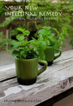 The Homestead Survival | How to Use Peppermint to Cure Stomach Ailments | <a href=