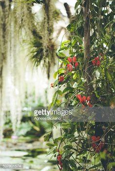 A walk in a botanical garden