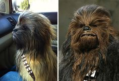 Beware! When you see the similarities in these Dog faces you might faint laughing! - Viralomia