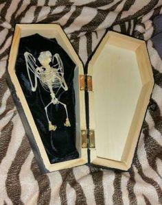 real bat skeletons for sale - Google Search