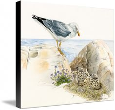 Seagull - nesting bird on the Ligurian coast  by Patrizia Donaera , from  $102.70