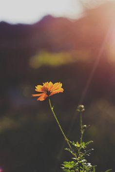 Definitely Photography   Source: http://definitelyphotography.tumblr.com/post/136339921816