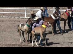 Baby Horses Abused at 2010 Cheyenne Rodeo sorry but this is not abuse its a sport sorry to burst your bubble!