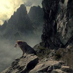 Aslan: The real Lion King, looking at His Kingdom. Beautiful Creatures, Animals Beautiful, Cute Animals, Wildlife Photography, Animal Photography, Mundo Animal, Big Cats, Animal Kingdom, Lions